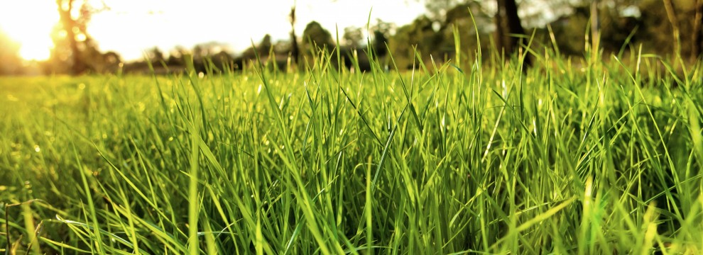 lush-grass_Snapseed-990×360